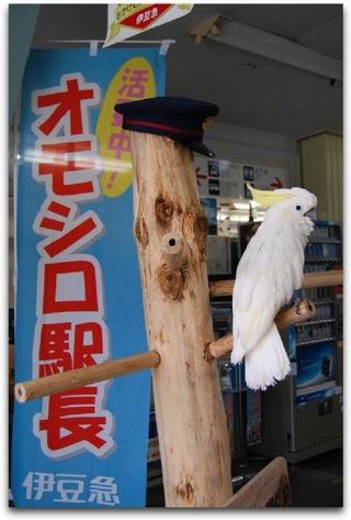 伊豆急行の伊豆稲取駅、駅長にオウムが就任。