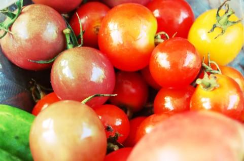 トマトジュースを運動前に飲むと疲労が軽減するらしい。トマトブームくるか?
