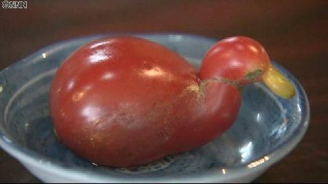 どう見てもアヒルにしか見えないトマトが見つかったようです
