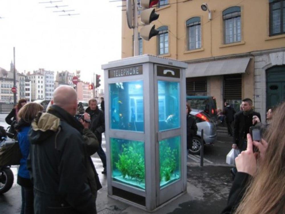 電話ボックスを水槽にしちゃった!通行人も大注目