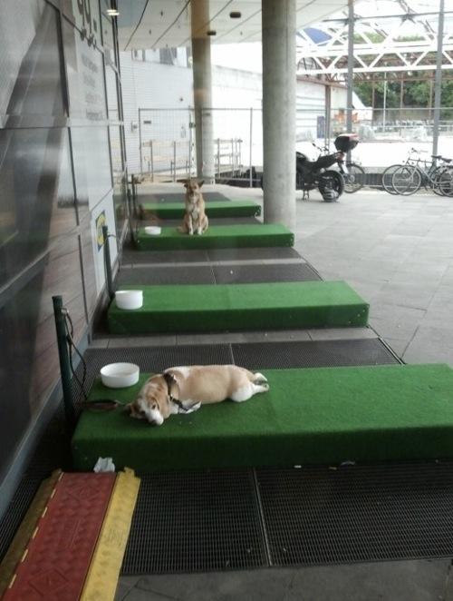 ドイツのIKEA、犬用のパーキングスペースを設置