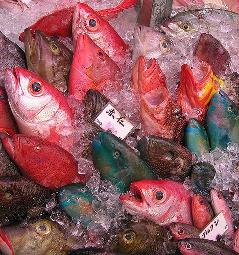 魚がおいしいと思う都道府県ランキング、第2位は静岡