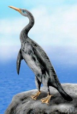 penguinmodoki